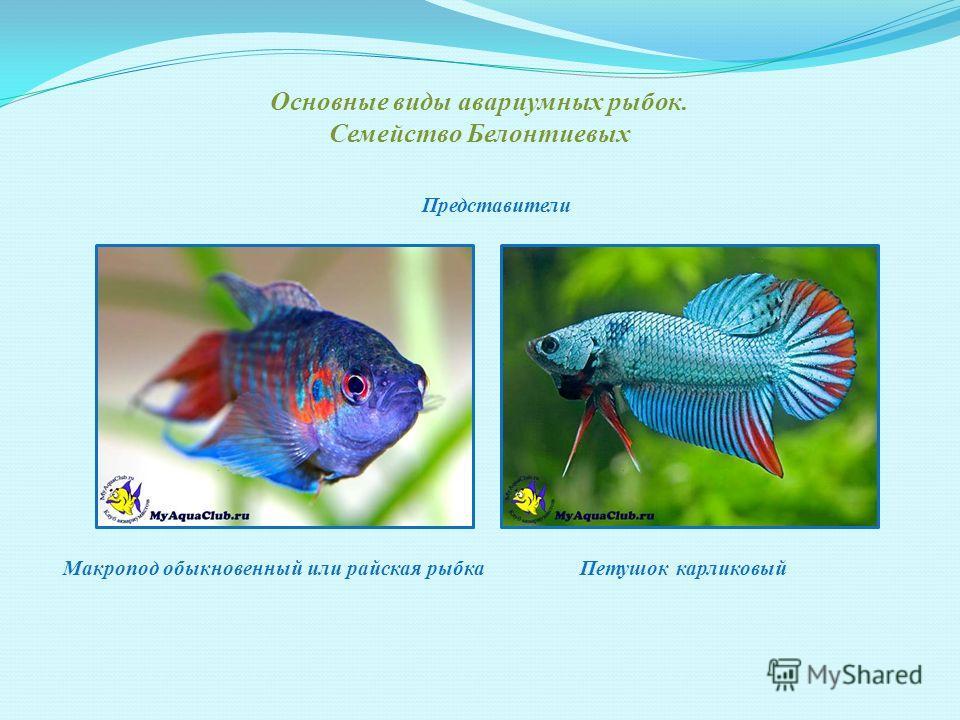 Разведение аквариумных рыбок - популярное занятие среди любителей создать уют в своем доме. В настоящее время в аквариумах любителей содержится около 300 видов рыб