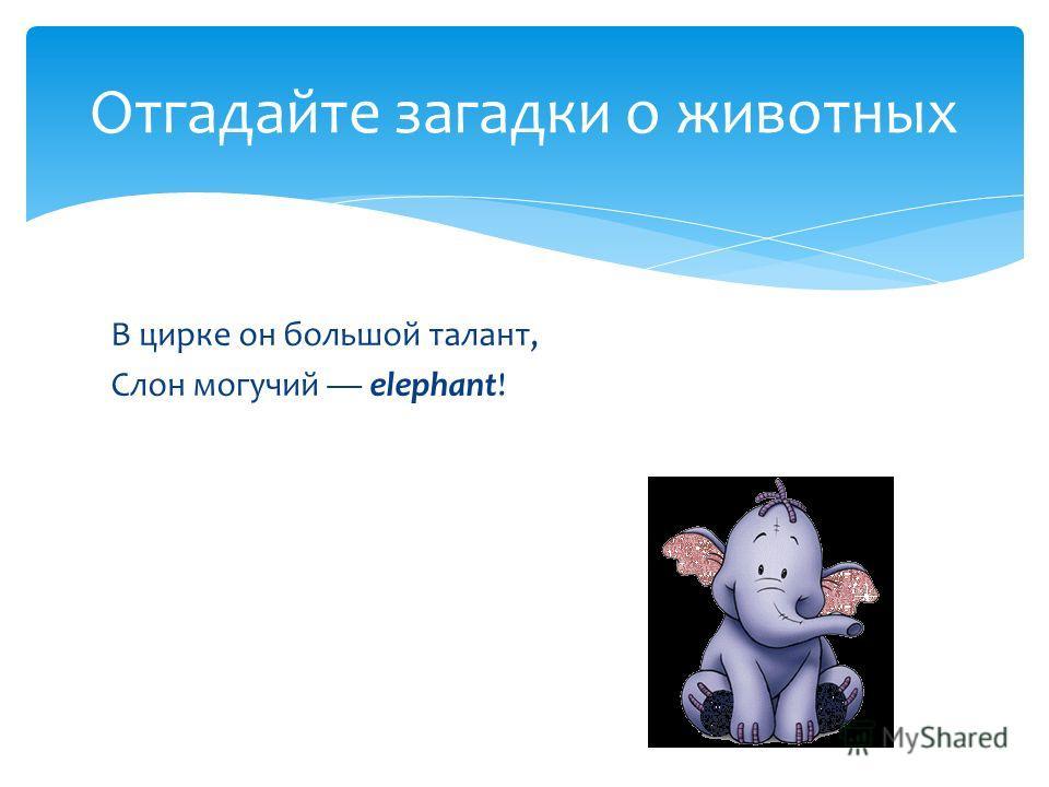 В цирке он большой талант, Слон могучий elephant! Отгадайте загадки о животных