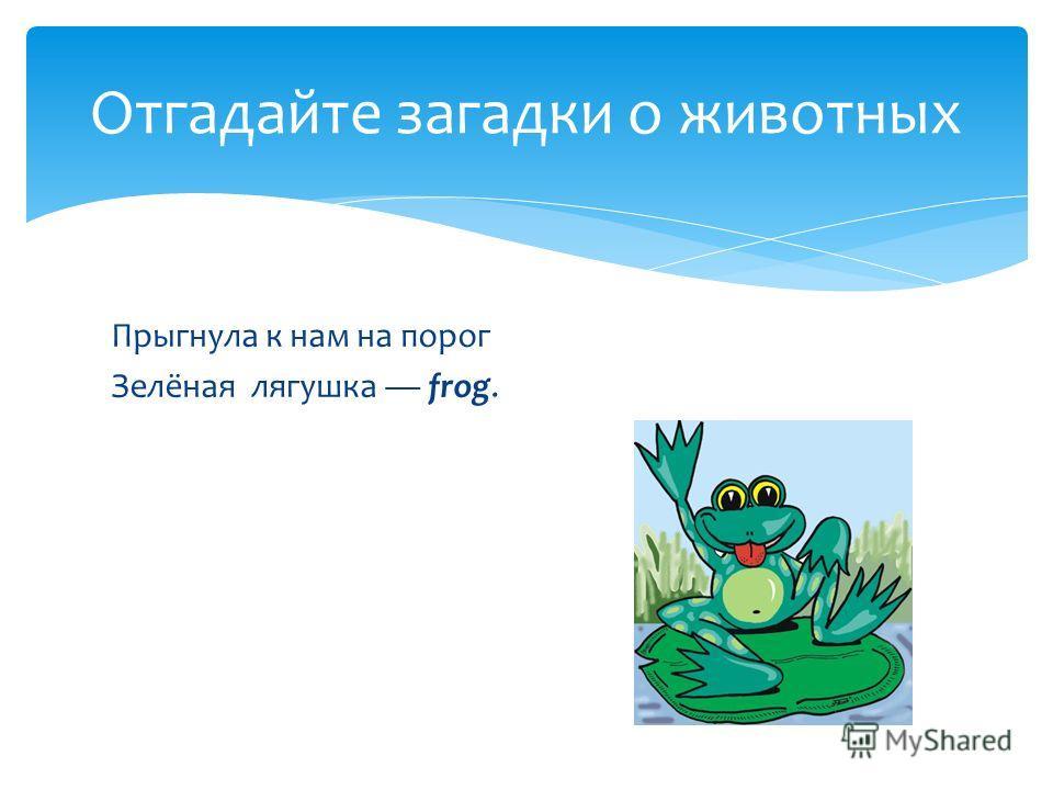 Прыгнула к нам на порог Зелёная лягушка frog. Отгадайте загадки о животных