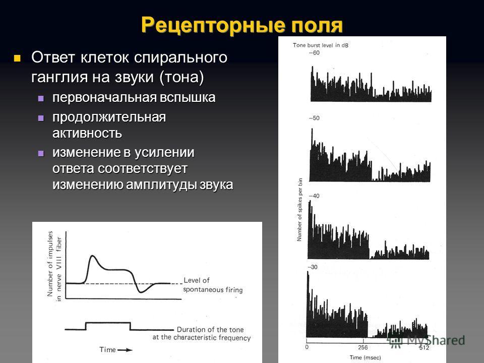Рецепторные поля Ответ клеток спирального ганглия на звуки (тона) Ответ клеток спирального ганглия на звуки (тона) первоначальная вспышка первоначальная вспышка продолжительная активность продолжительная активность изменение в усилении ответа соответ