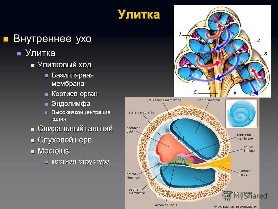 Имплантат Улитковый фото