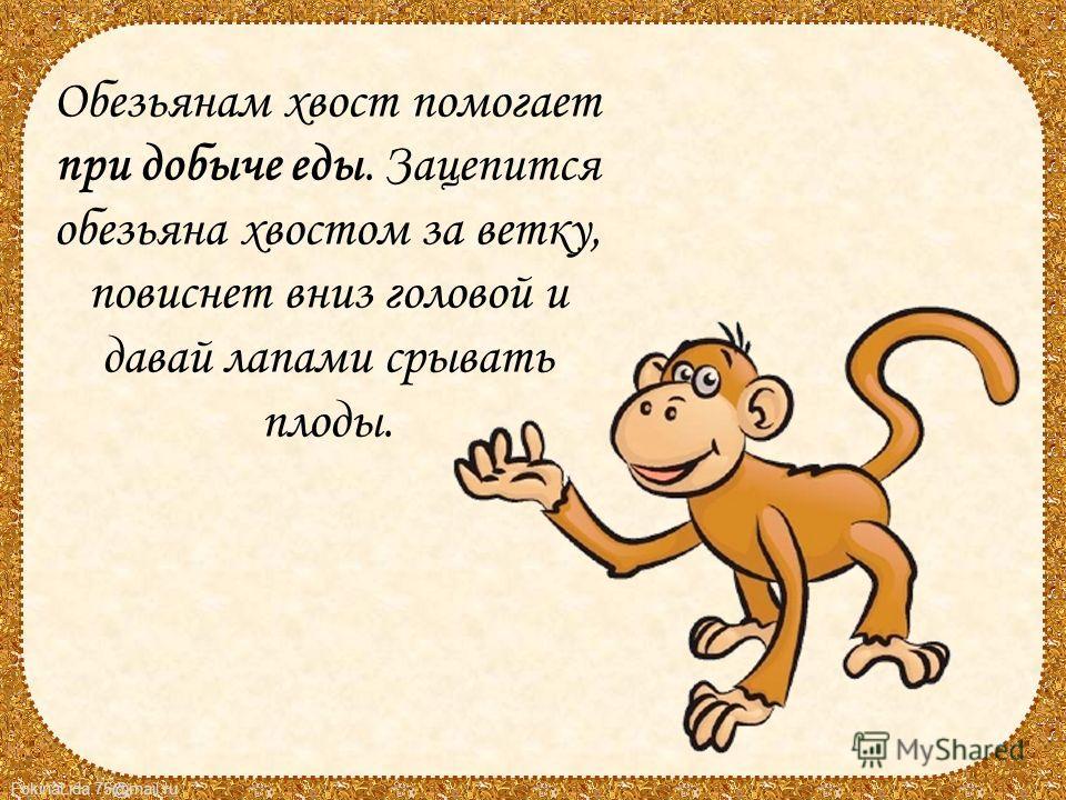 FokinaLida.75@mail.ru Обезьянам хвост помогает при добыче еды. Зацепится обезьяна хвостом за ветку, повиснет вниз головой и давай лапами срывать плоды.