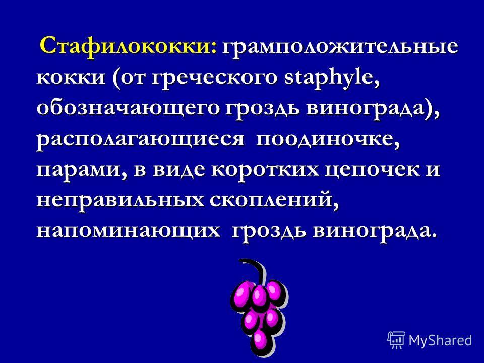 Что такое метициллин- резистентные Staphylococcus aureus (MRSA)? 3. Что такое пенициллин и метициллин? 3. Что такое пенициллин и метициллин? 4.Что такое ПСБ? 4.Что такое ПСБ? 5.Что такое бета-лактамы и 5.Что такое бета-лактамы и бета-лактамазы? бета-
