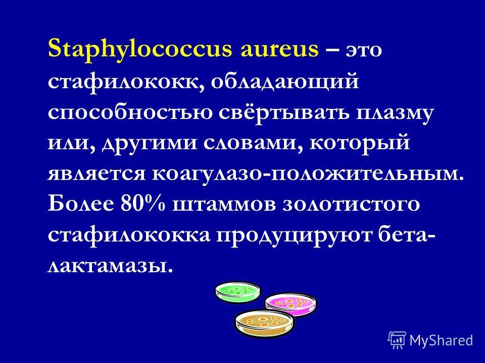 Стафилококки: грамположительные кокки (от греческого staphyle, обозначающего гроздь винограда), располагающиеся поодиночке, парами, в виде коротких цепочек и неправильных скоплений, напоминающих гроздь винограда. Стафилококки: грамположительные кокки