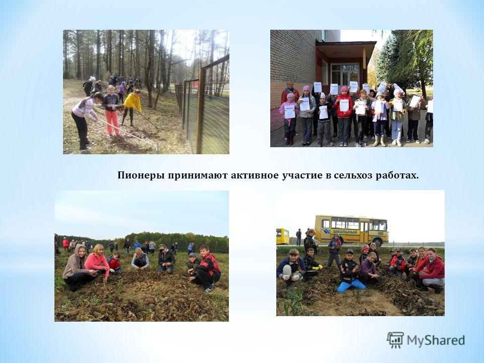 Пионеры принимают активное участие в сельхоз работах.
