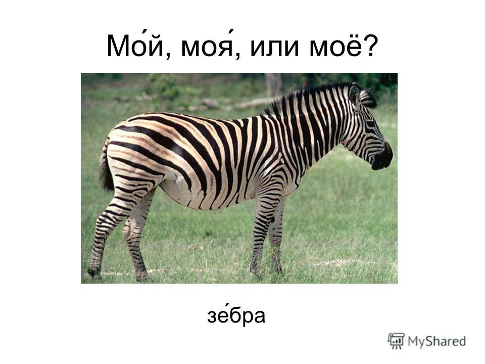 Мо́й, моя́, или моё? зебра