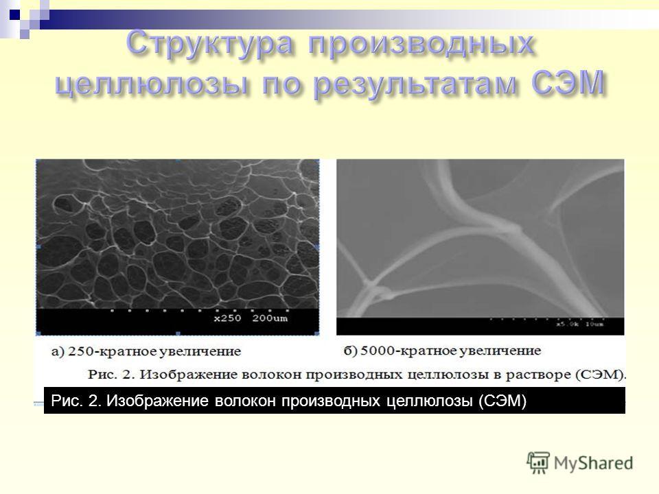Рис. 2. Изображение волокон производных целлюлозы (СЭМ)