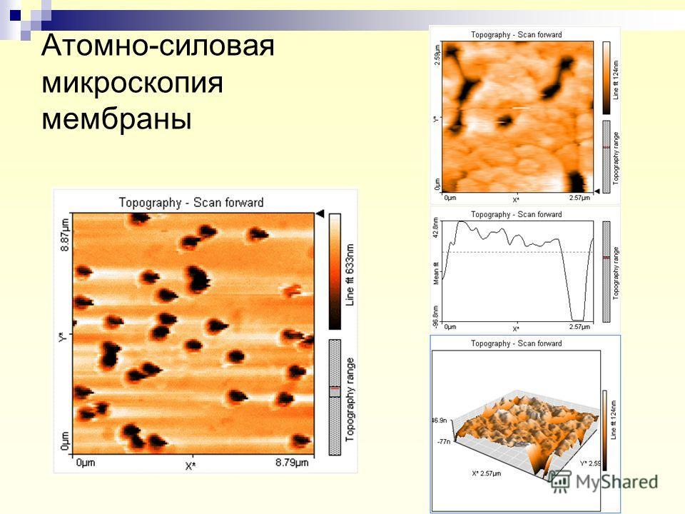 Атомно-силовая микроскопия мембраны