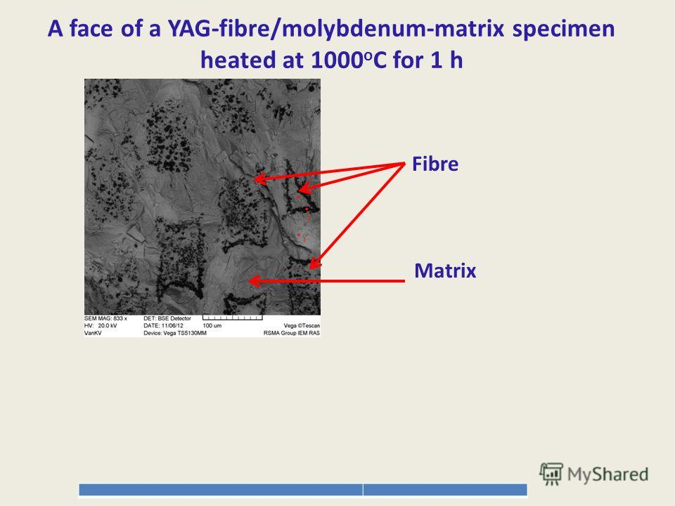 A face of a YAG-fibre/molybdenum-matrix specimen heated at 1000 o C for 1 h Fibre Matrix