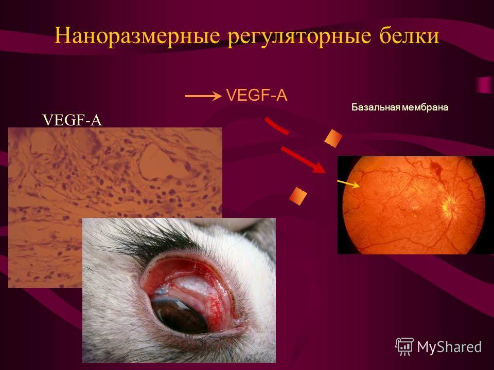 Наноразмерные регуляторные белки VEGF-A Базальная мембрана VEGF-A