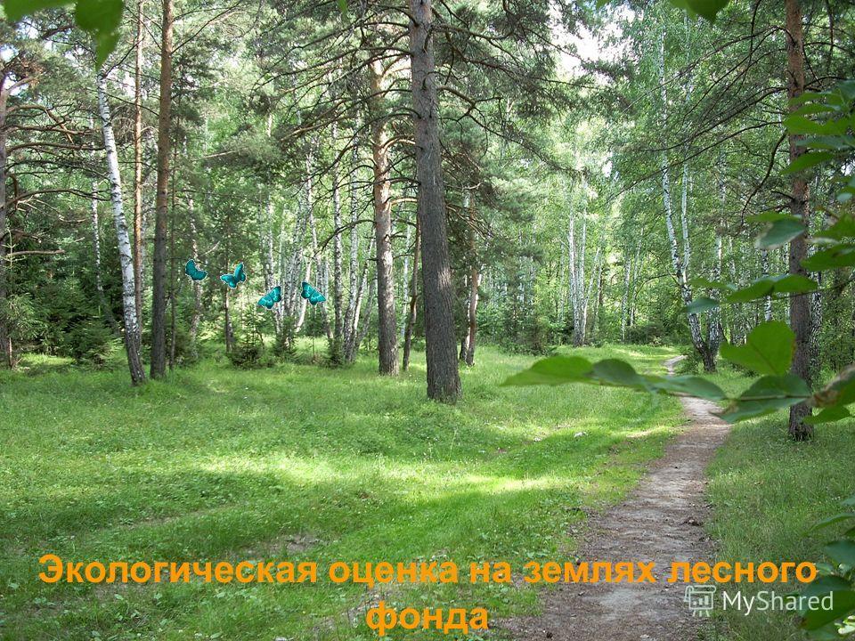Экологическая оценка на землях лесного фонда