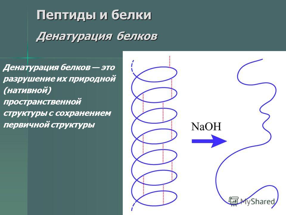 32 Пептиды и белки Денатурация белков Денатурация белков это разрушение их природной (нативной) пространственной структуры с сохранением первичной структуры