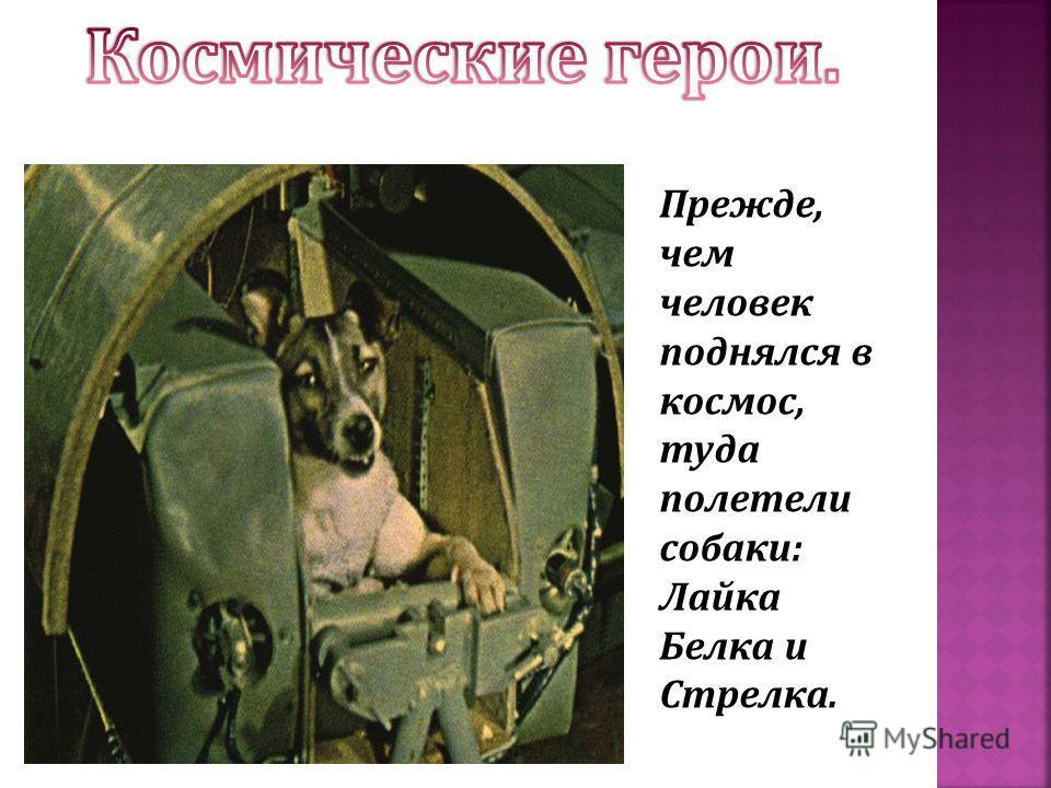 Прежде, чем человек поднялся в космос, туда полетели собаки: Лайка Белка и Стрелка.