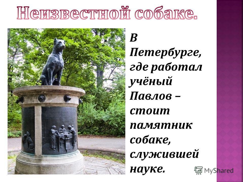 В Петербурге, где работал учёный Павлов – стоит памятник собаке, служившей науке.