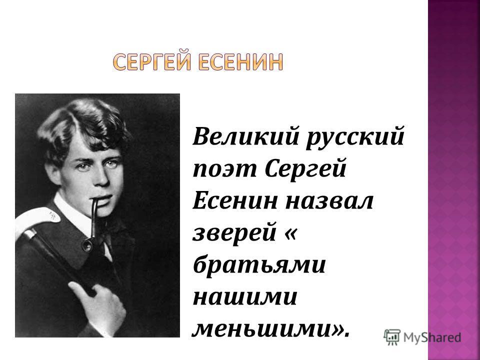 Великий русский поэт Сергей Есенин назвал зверей « братьями нашими меньшими».