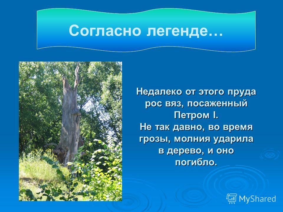 Недалеко от этого пруда рос вяз, посаженный Петром I. Не так давно, во время грозы, молния ударила в дерево, и оно погибло. Согласно легенде…