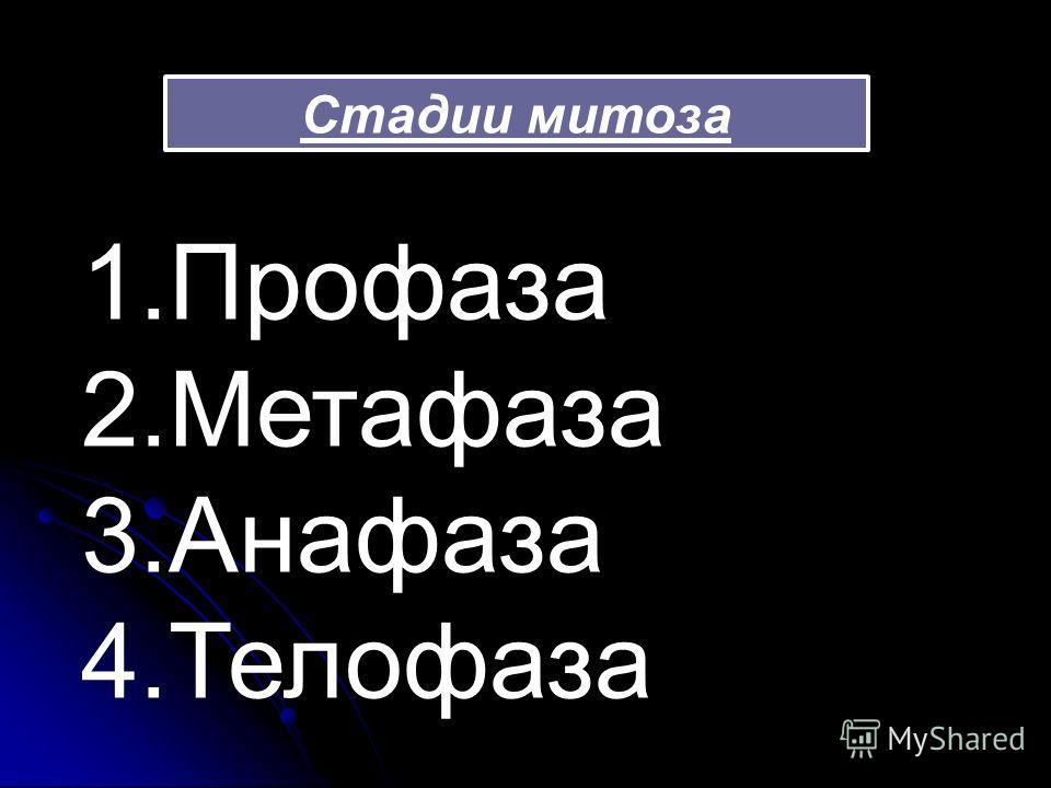 Стадии митоза 1.Профаза 2.Метафаза 3.Анафаза 4.Телофаза