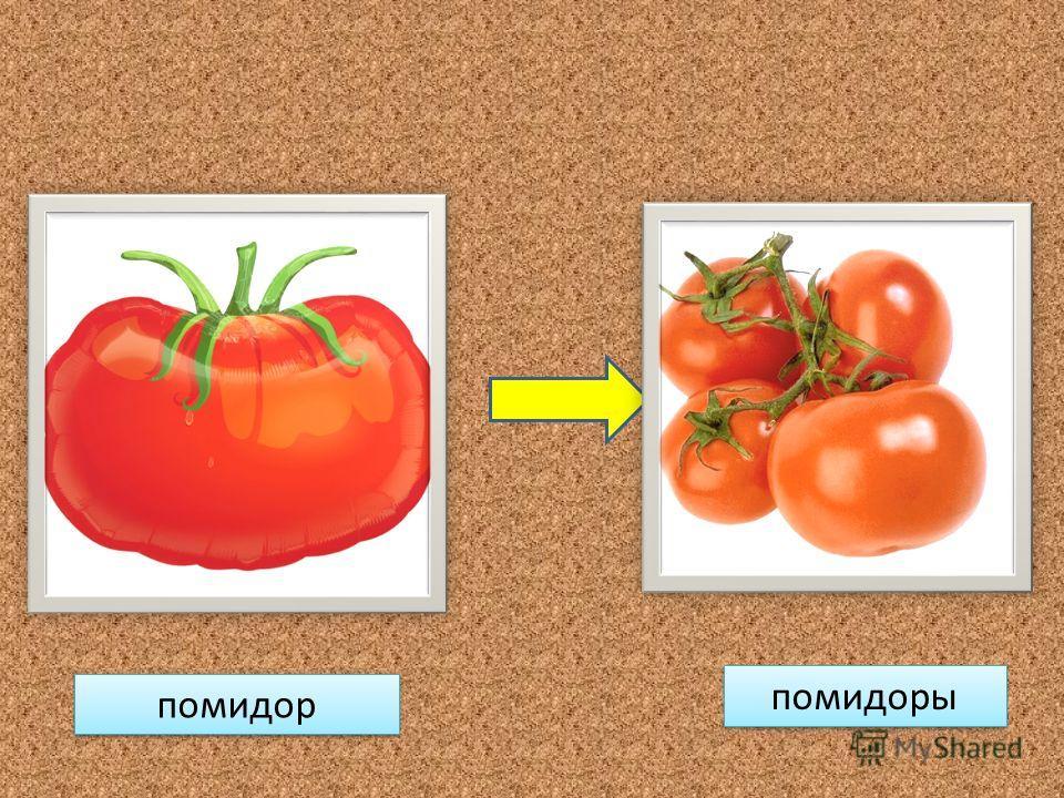помидор помидоры