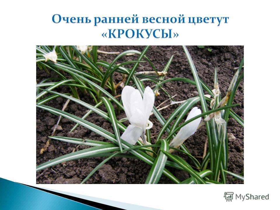 Презентация Бутова С.И. Студента Школы «Успех в INTERNET PRO 100 » Май 2012г