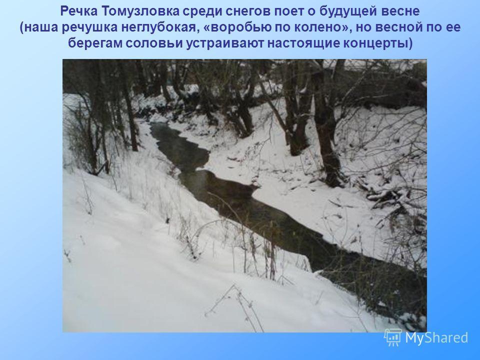 Речка Томузловка среди снегов поет о будущей весне (наша речушка неглубокая, «воробью по колено», но весной по ее берегам соловьи устраивают настоящие концерты)