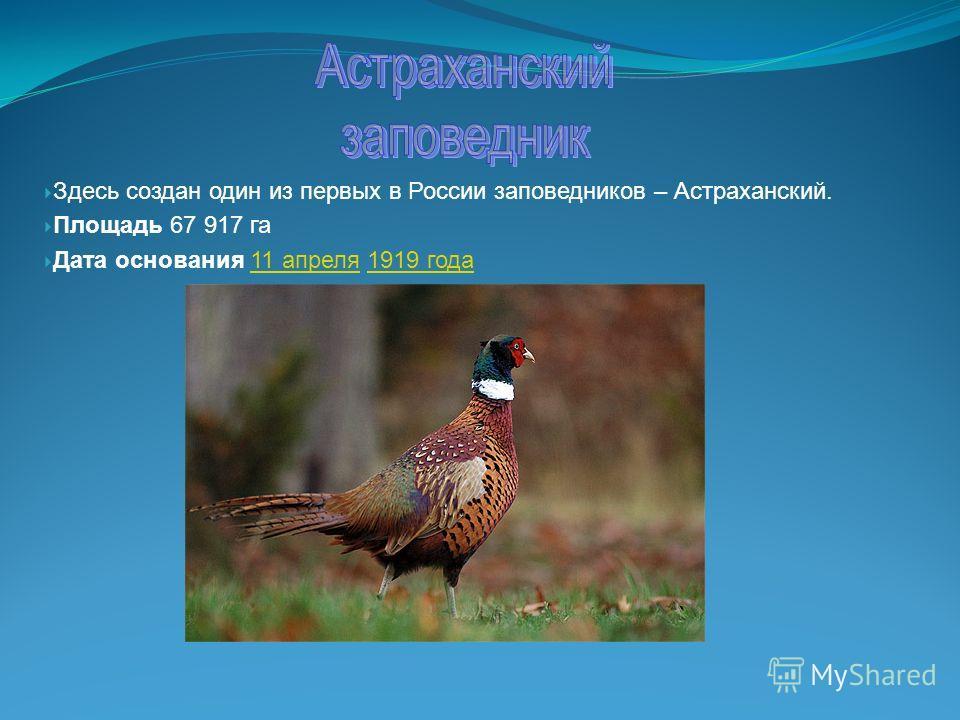 Здесь создан один из первых в России заповедников – Астраханский. Площадь 67 917 га Дата основания 11 апреля 1919 года11 апреля1919 года