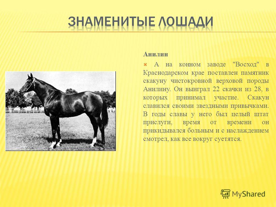Анилин А на конном заводе