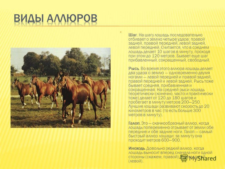 Шаг. На шагу лошадь последовательно отбивает о землю четыре удара: правой задней, правой передней, левой задней, левой передней. Считается, что в среднем лошадь делает 10 шагов в минуту, проходя при этом до 120 метров. Бывает еще шаг прибавленный, со