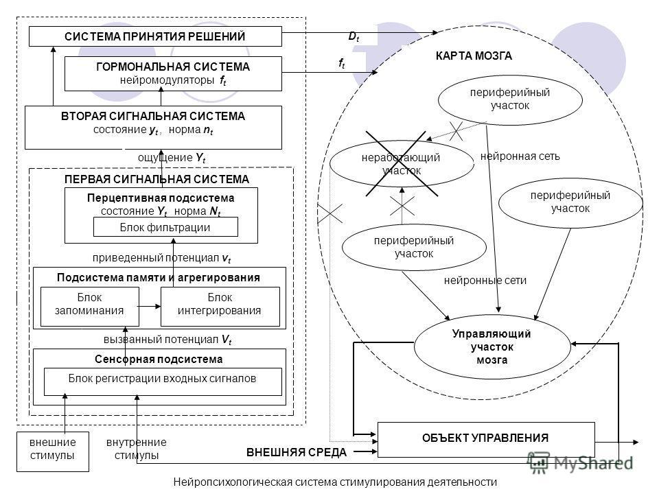 Нейропсихологическая система стимулирования деятельности ГОРМОНАЛЬНАЯ СИСТЕМА нейромодуляторы f t ВТОРАЯ СИГНАЛЬНАЯ СИСТЕМА состояние y t, норма n t ощущение Y t ПЕРВАЯ СИГНАЛЬНАЯ СИСТЕМА приведенный потенциал v t Подсистема памяти и агрегирования Бл