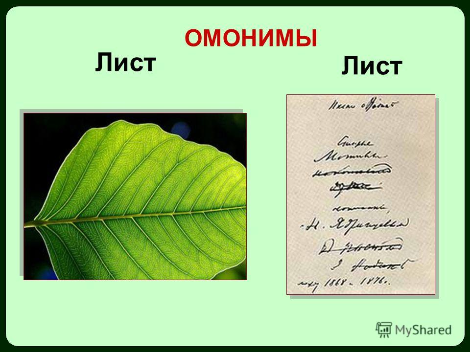 Лист ОМОНИМЫ