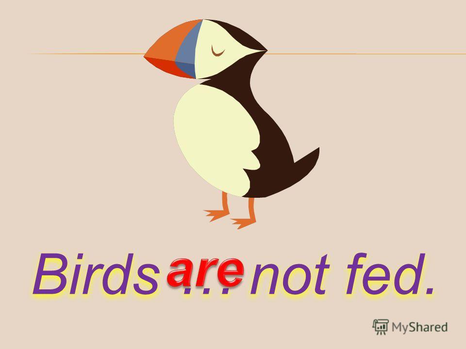 Birds … not fed.