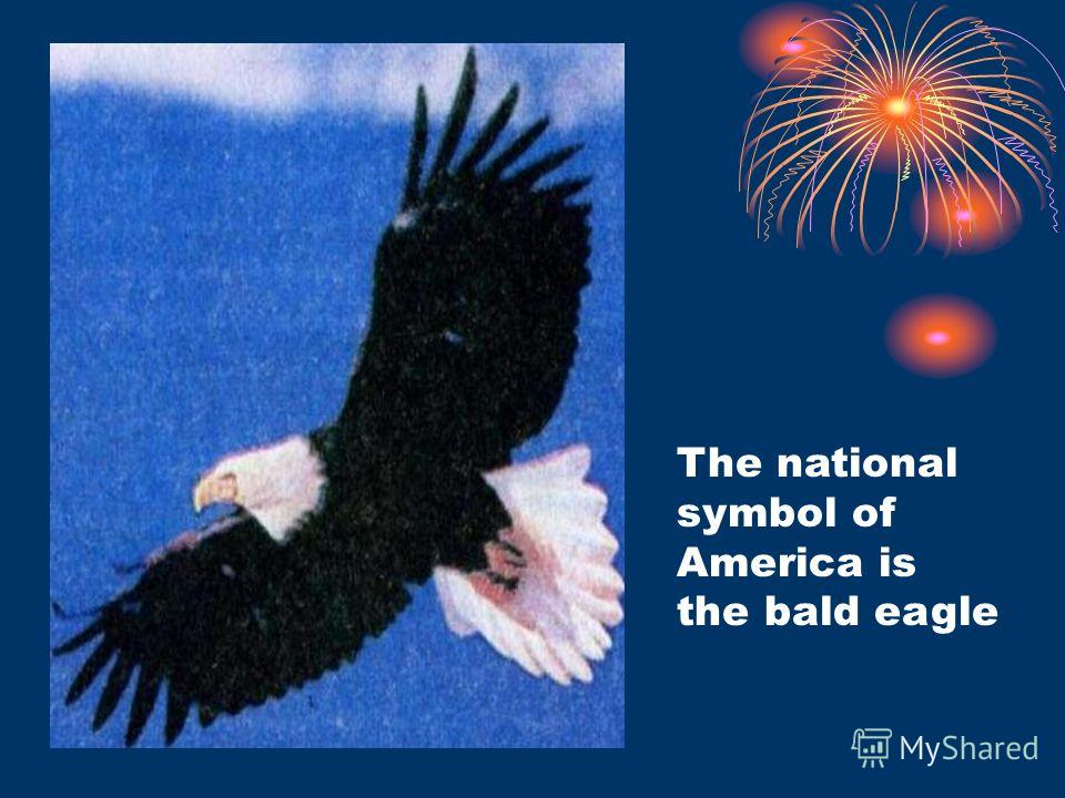 The national symbol of America is the bald eagle