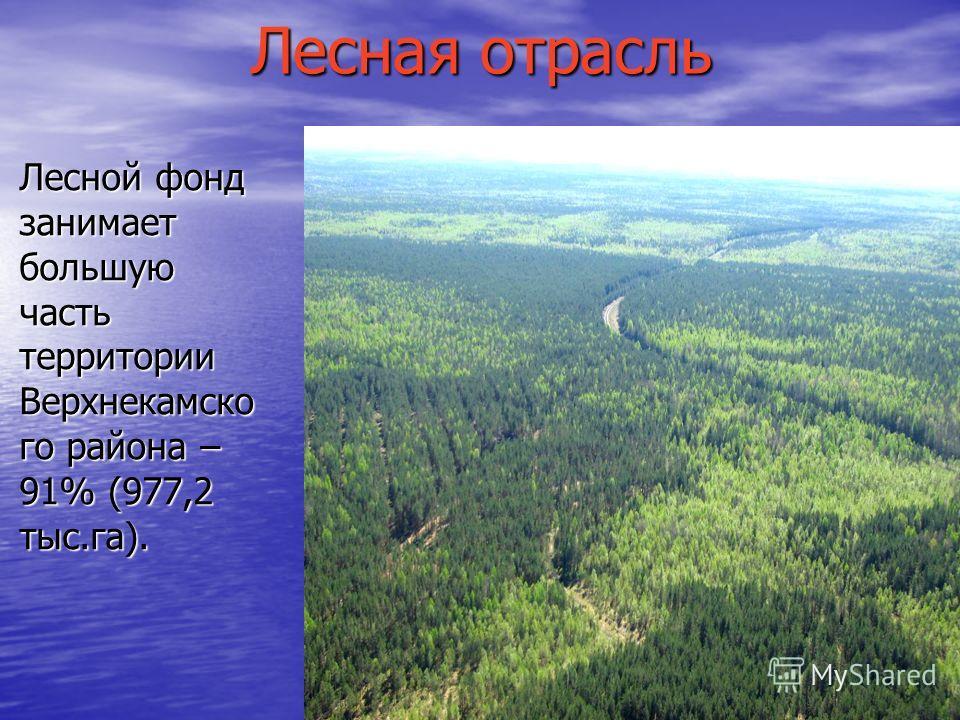 Лесная отрасль Лесной фонд занимает большую часть территории Верхнекамско го района – 91% (977,2 тыс.га).