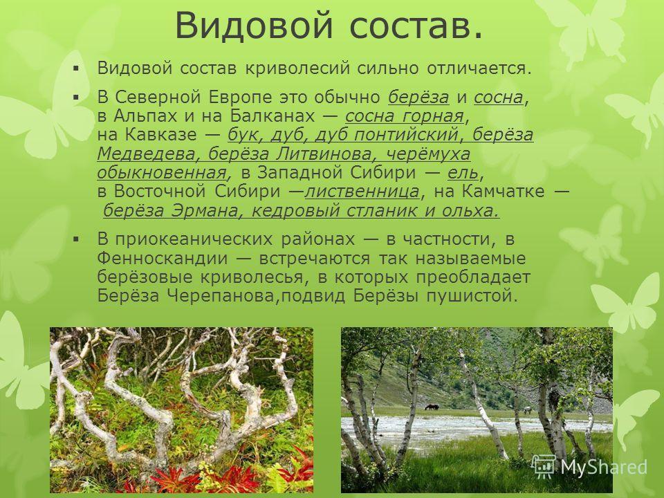 Видовой состав. Видовой состав криволесий сильно отличается. В Северной Европе это обычно берёза и сосна, в Альпах и на Балканах сосна горная, на Кавказе бук, дуб, дуб понтийский, берёза Медведева, берёза Литвинова, черёмуха обыкновенная, в Западной