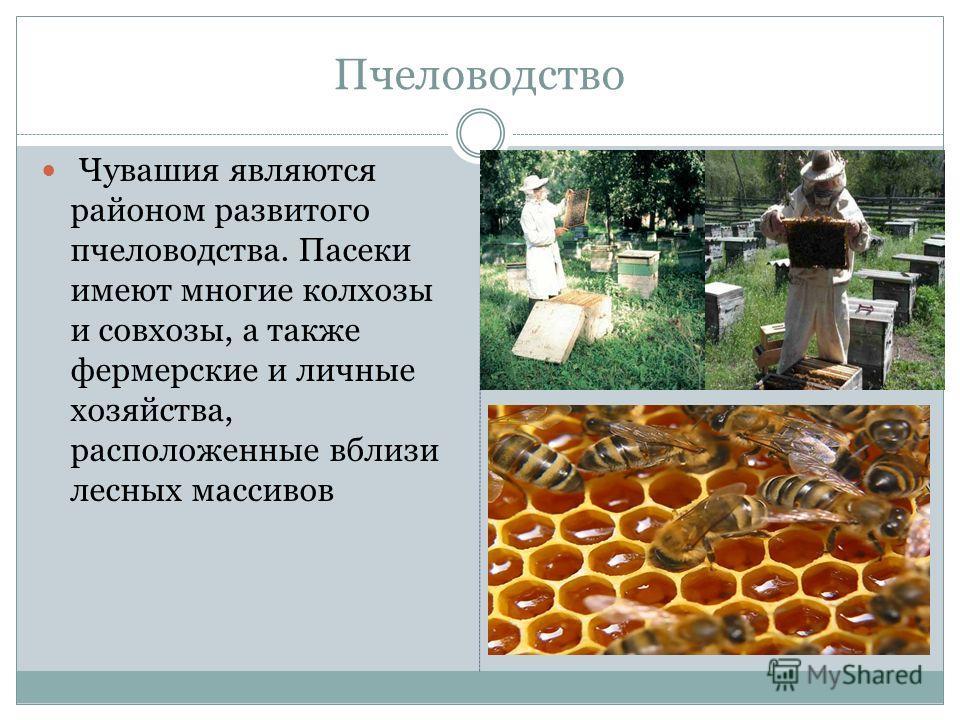 Пчеловодство Чувашия являются районом развитого пчеловодства. Пасеки имеют многие колхозы и совхозы, а также фермерские и личные хозяйства, расположенные вблизи лесных массивов