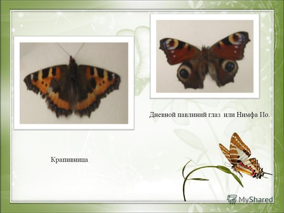 Крапивница Дневной павлиний глаз или Нимфа Ио.
