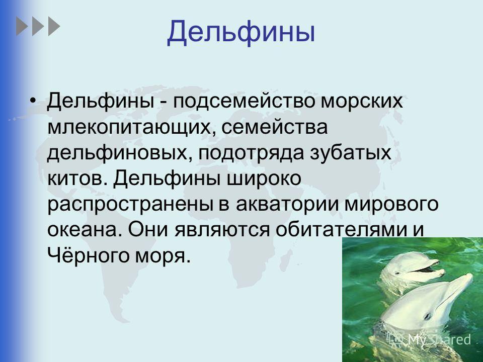 Дельфины - подсемейство морских млекопитающих, семейства дельфиновых, подотряда зубатых китов. Дельфины широко распространены в акватории мирового океана. Они являются обитателями и Чёрного моря.