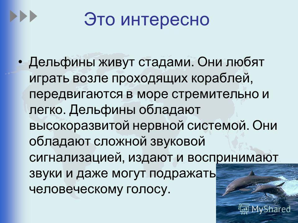 Это интересно Дельфины живут стадами. Они любят играть возле проходящих кораблей, передвигаются в море стремительно и легко. Дельфины обладают высокоразвитой нервной системой. Они обладают сложной звуковой сигнализацией, издают и воспринимают звуки и