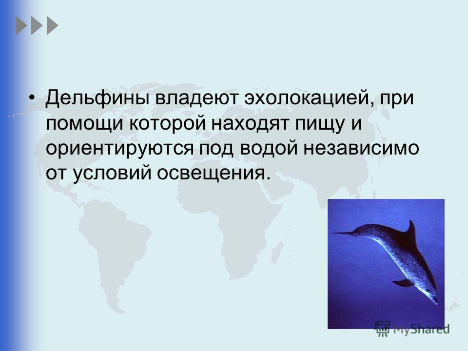 Дельфины владеют эхолокацией, при помощи которой находят пищу и ориентируются под водой независимо от условий освещения.
