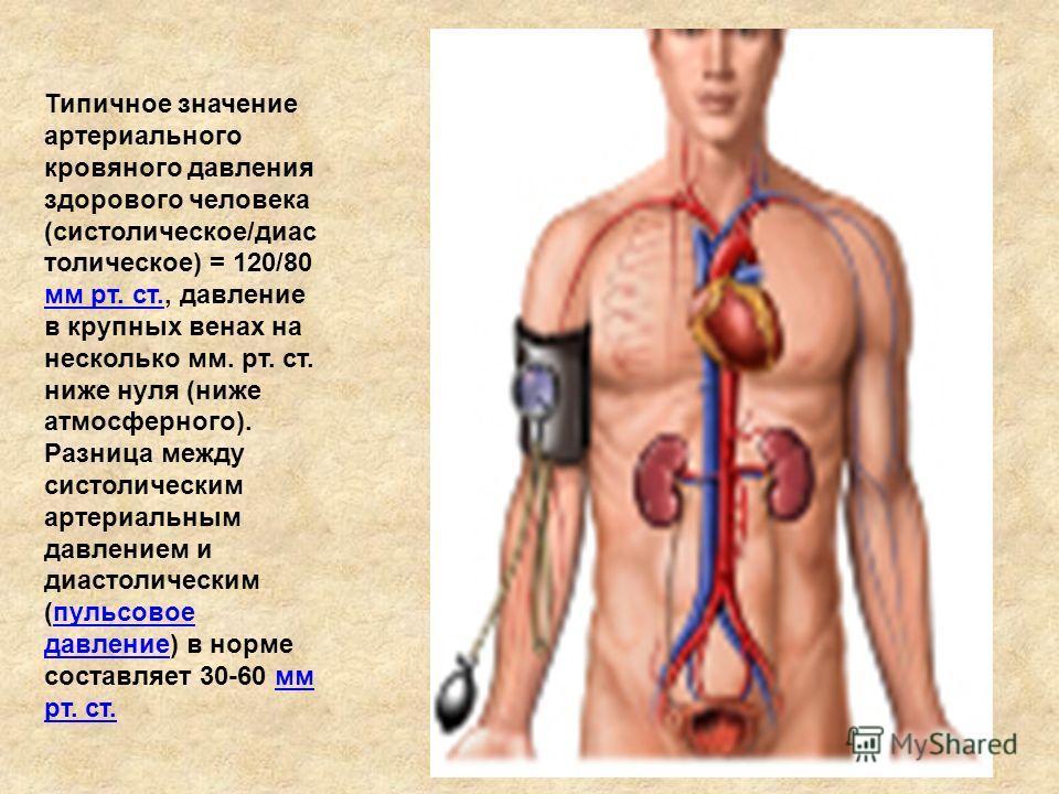 Типичное значение артериального кровяного давления здорового человека (систолическое/диас толическое) = 120/80 мм рт. ст., давление в крупных венах на несколько мм. рт. ст. ниже нуля (ниже атмосферного). Разница между систолическим артериальным давле
