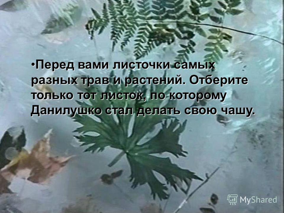 Перед вами листочки самых разных трав и растений. Отберите только тот листок, по которому Данилушко стал делать свою чашу.Перед вами листочки самых разных трав и растений. Отберите только тот листок, по которому Данилушко стал делать свою чашу.