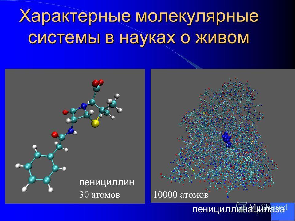 Характерные молекулярные системы в науках о живом пенициллин пенициллинацилаза 30 атомов10000 атомов