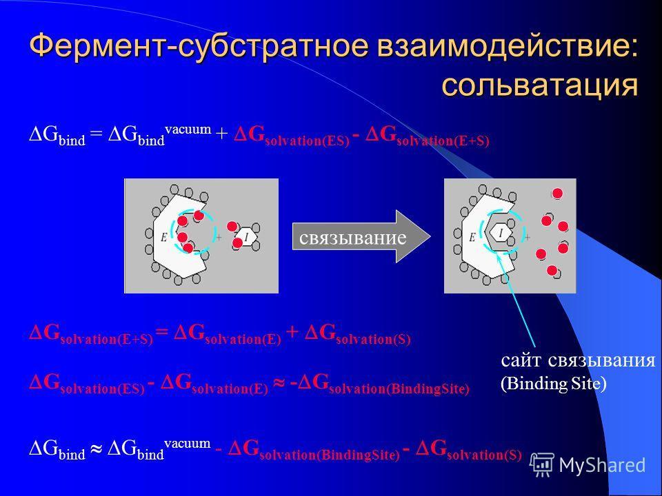 Фермент-субстратное взаимодействие: сольватация G bind = G bind vacuum + G solvation(ES) - G solvation(E+S) связывание G solvation(E+S) = G solvation(E) + G solvation(S) G solvation(ES) - G solvation(E) - G solvation(BindingSite) G bind G bind vacuum