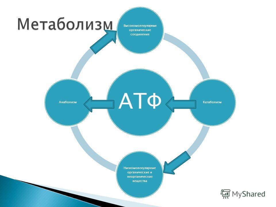 АТФ Высокомолекулярные органические соединения Катаболизм Низкомолекулярные органические и неорганические вещества Анаболизм