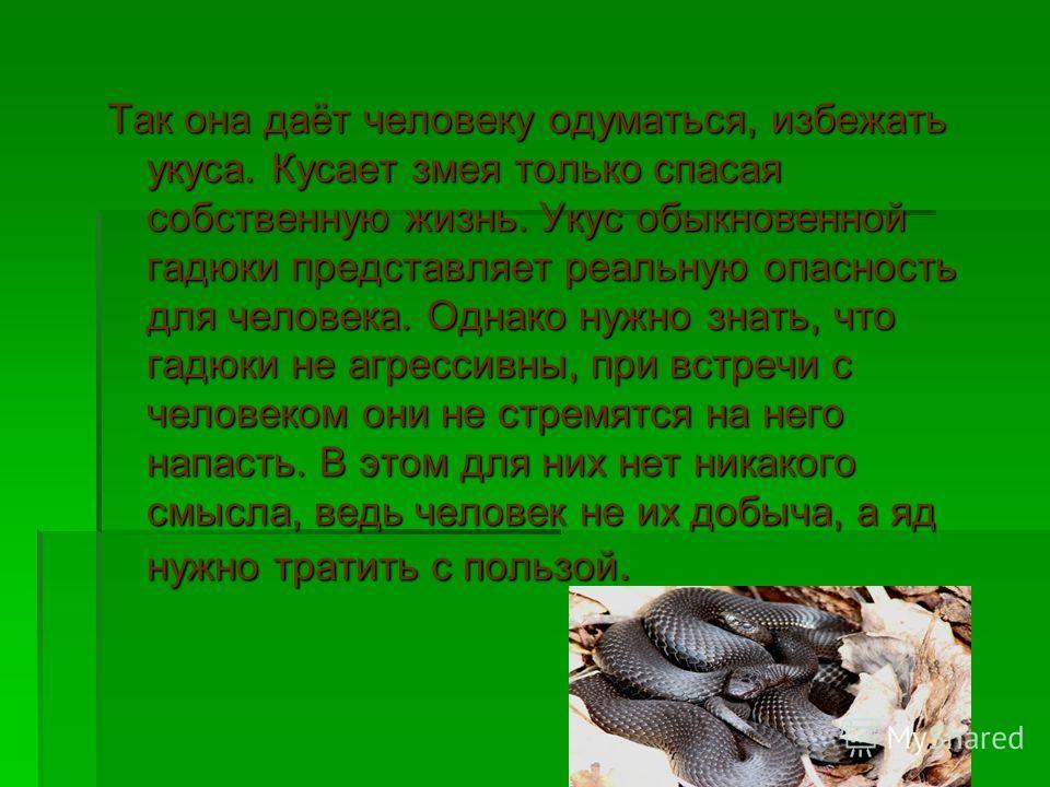 Так она даёт человеку одуматься, избежать укуса. Кусает змея только спасая собственную жизнь. Укус обыкновенной гадюки представляет реальную опасность для человека. Однако нужно знать, что гадюки не агрессивны, при встречи с человеком они не стремятс