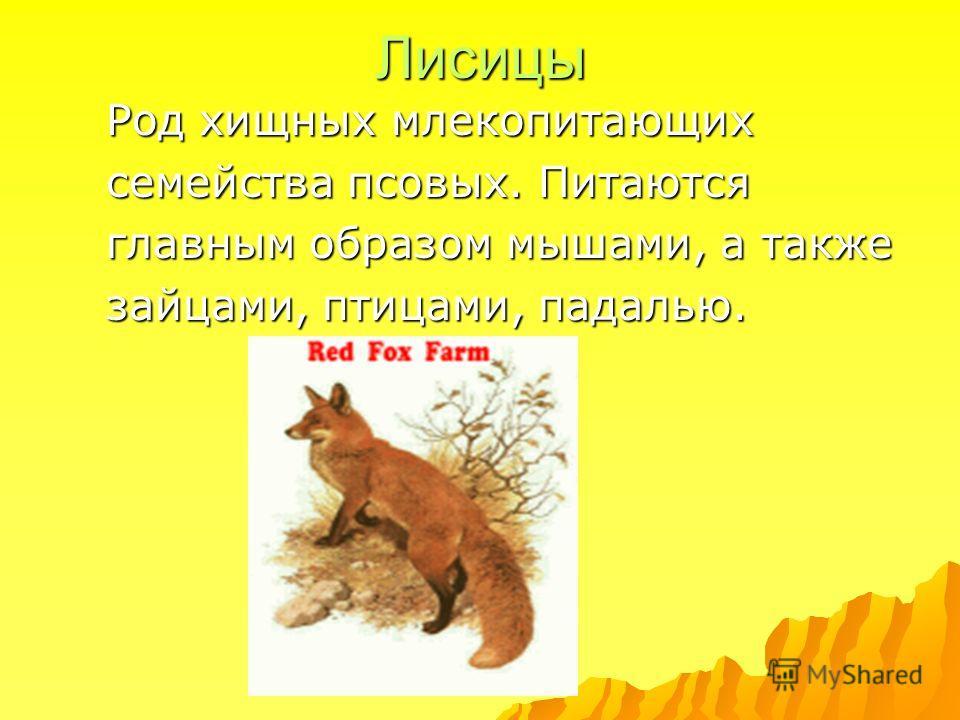 Лисицы Род хищных млекопитающих семейства псовых. Питаются главным образом мышами, а также зайцами, птицами, падалью.