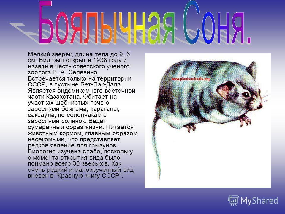 Мелкий зверек, длина тела до 9, 5 см. Вид был открыт в 1938 году и назван в честь советского ученого зоолога В. А. Селевина. Встречается только на территории СССР, в пустыне Бет-Пак-Дала. Является эндемиком юго-восточной части Казахстана. Обитает на
