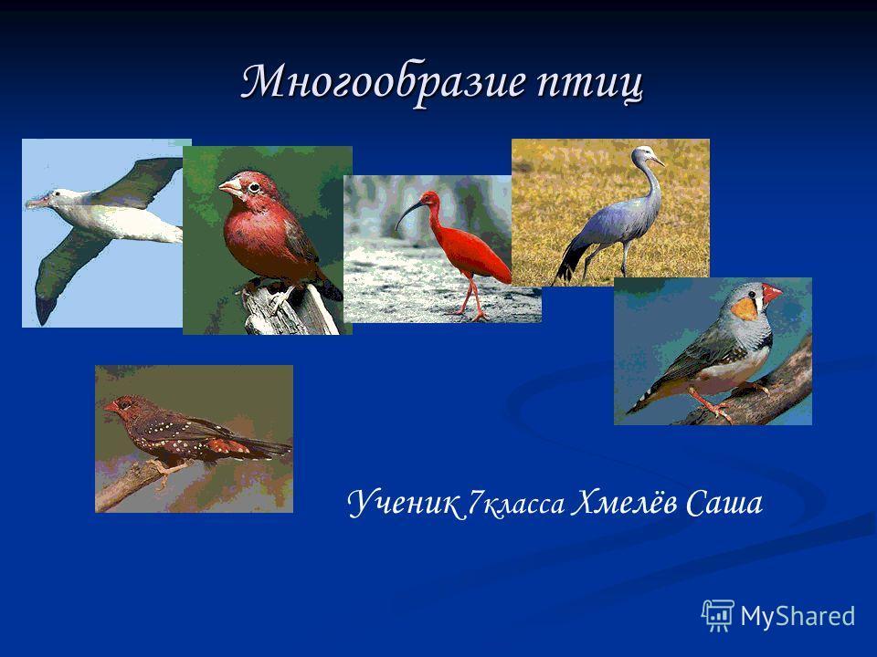 Многообразие птиц Ученик 7 класса Хмелёв Саша