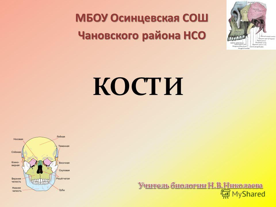 КОСТИ МБОУ Осинцевская СОШ Чановского района НСО