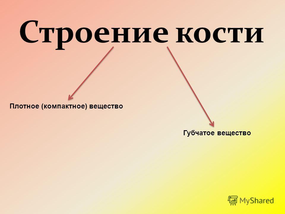 Строение кости Плотное (компактное) вещество Губчатое вещество
