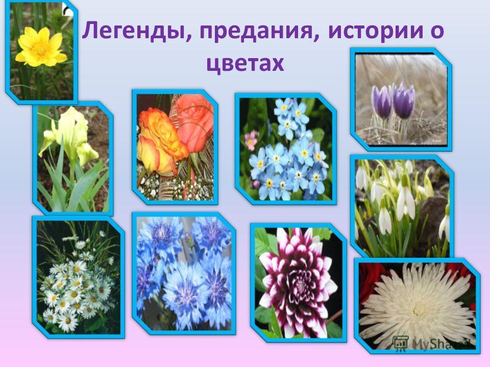 Легенды, предания, истории о цветах